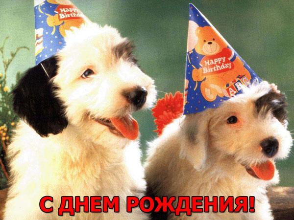 Поздравления с днем рождения от собачки