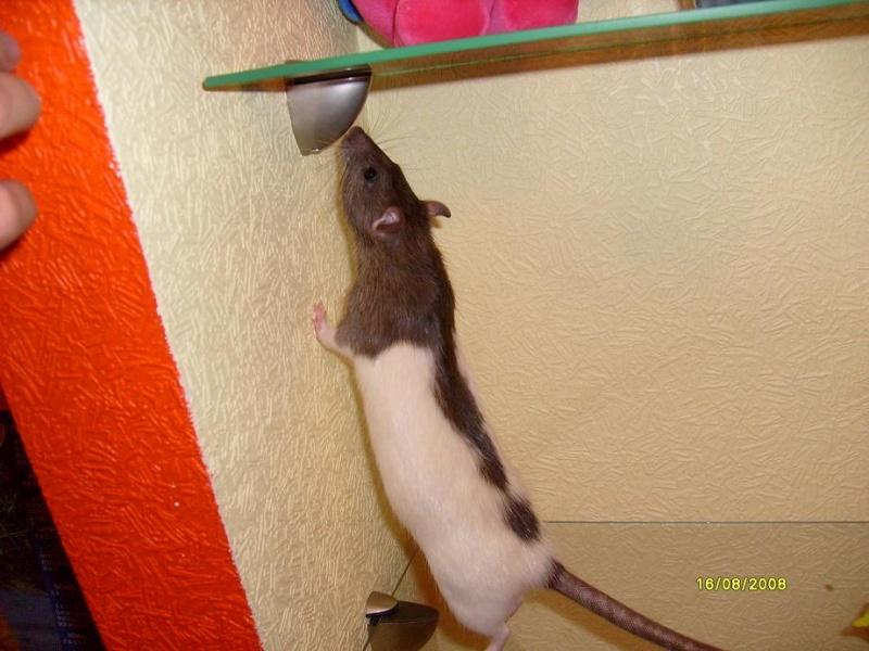 Чем усыпляют крыс в домашних условиях 219