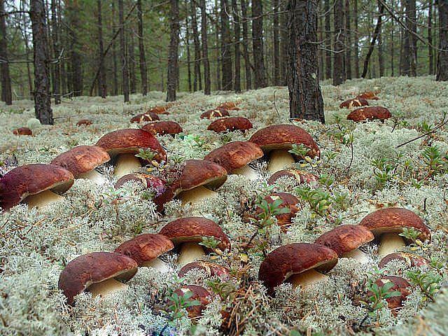Сажать во сне гриб 292