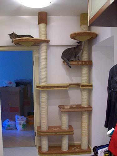 Дом для котов