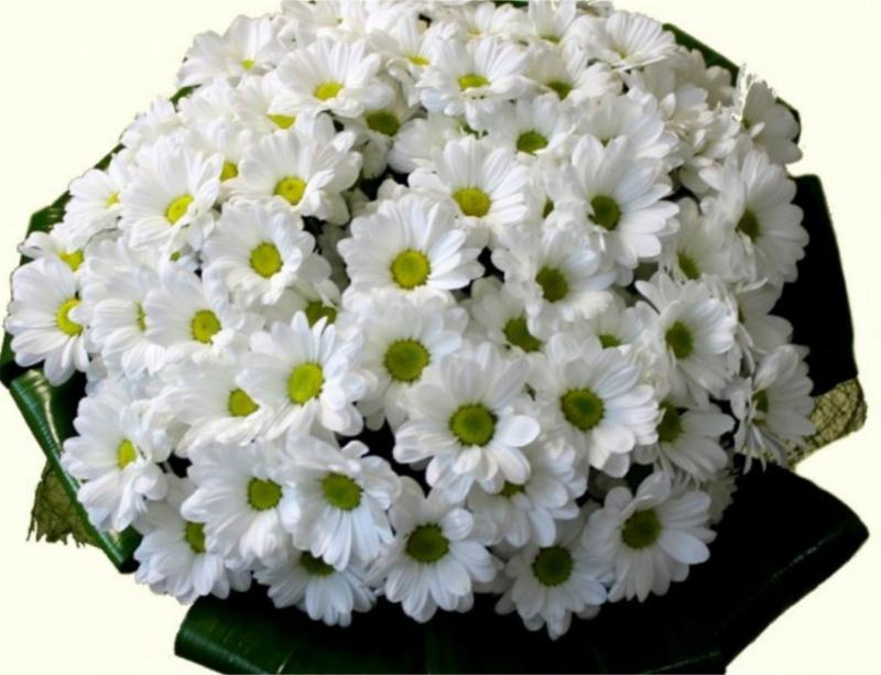 Где купить комнатные цветы дешево в москве форум фотообои купить интернет магазин украина цветы